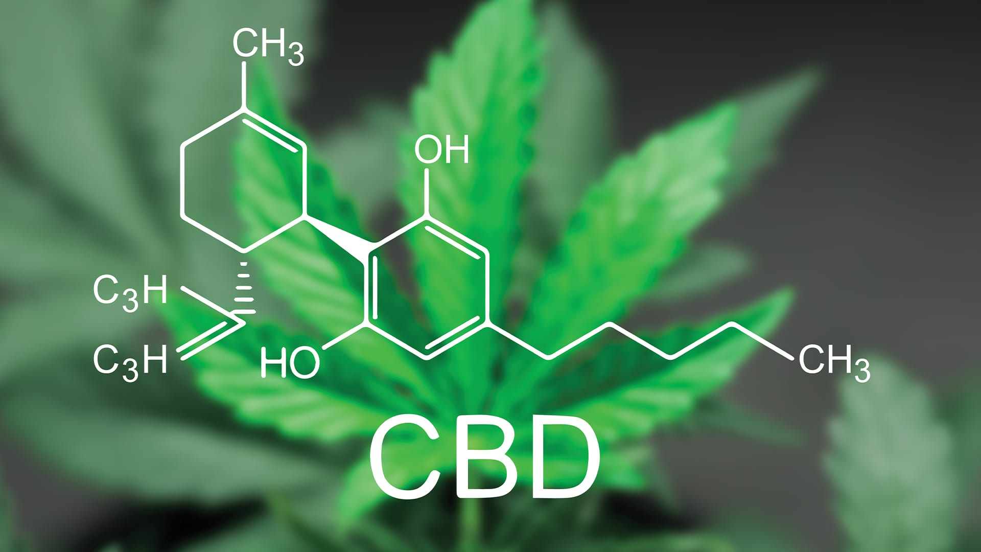 What is CBD Oil and just how CBD Functions?