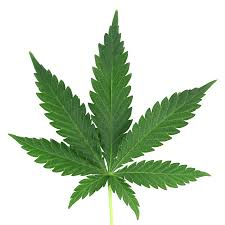 CBD and Unknown  Facts Relating to It